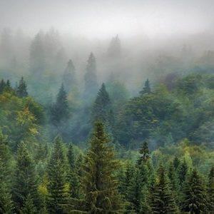 Une grande forêt d'arbres, ce que nous souhaitons préserver